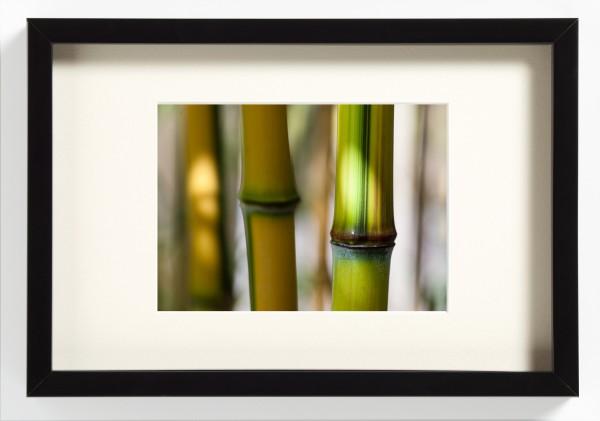 WAKATAKE junge Bambus Japan